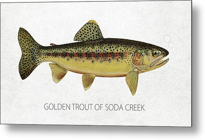 Golden Trout Of Soda Creek Metal Print by Aged Pixel