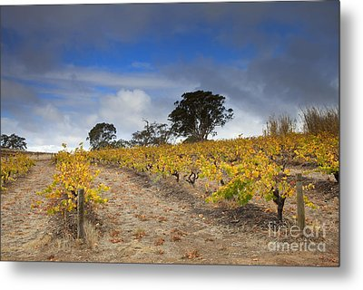 Golden Vines Metal Print by Mike  Dawson