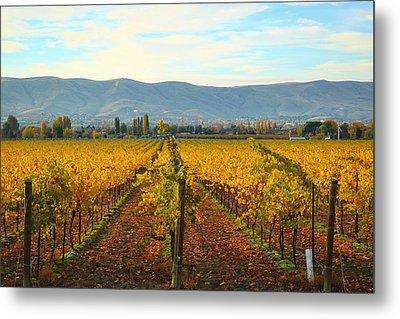 Golden Vineyards Metal Print by Lynn Hopwood