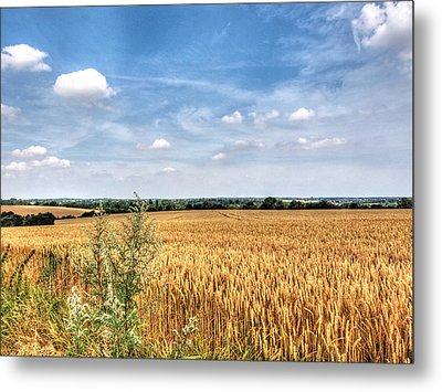 Golden Wheat Fields Metal Print