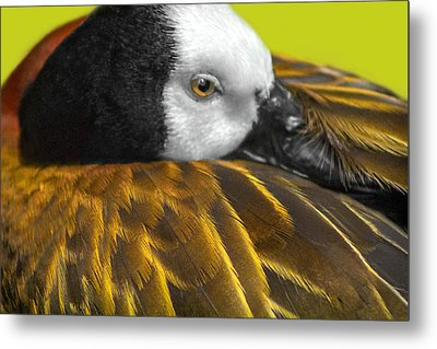 Golden Wings Metal Print by Marion Johnson