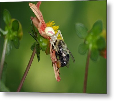 Metal Print featuring the photograph Goldenrod Spider by James Peterson