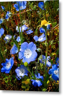 Goldfields And Baby Blue Eyes In Park Sierra-ca Metal Print by Ruth Hager