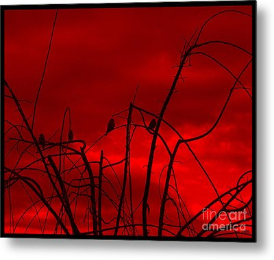 Metal Print featuring the photograph Goldfinch Against Red by Heidi Manly