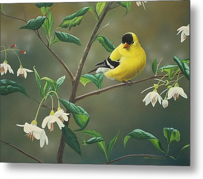 Goldfinch And Snowbells Metal Print