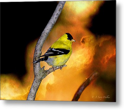 Goldfinch At The Edge Of The Abyss Metal Print by J Larry Walker