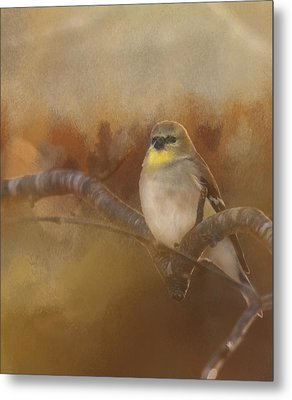 Resting Goldfinch Metal Print
