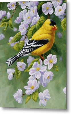 Goldfinch Blossoms Greeting Card 1 Metal Print by Crista Forest