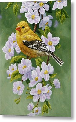 Goldfinch Blossoms Greeting Card 2 Metal Print by Crista Forest