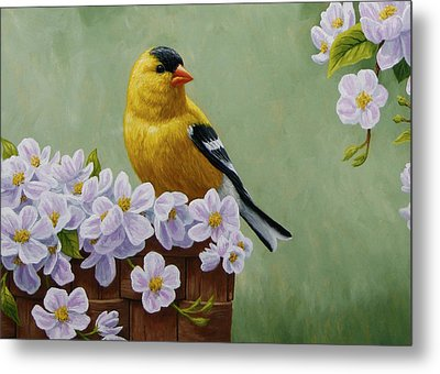 Goldfinch Blossoms Greeting Card 3 Metal Print by Crista Forest