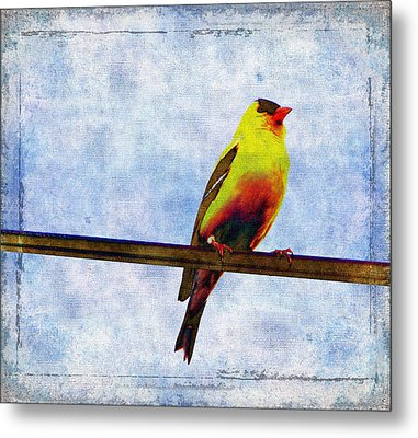 Goldfinch Metal Print by Cassie Peters