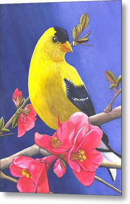 Goldfinch Metal Print by Catherine G McElroy