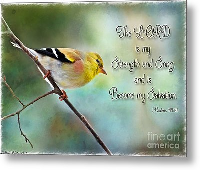 Goldfinch With Rosy Shoulder - Digital Paint And Verse Metal Print