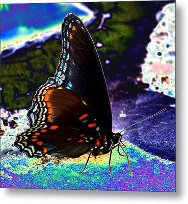 Gona-fly-butterfly Metal Print by Kim Pate