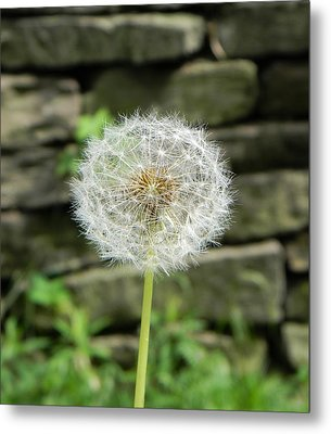 Metal Print featuring the photograph Gone To Seed by Jean Goodwin Brooks