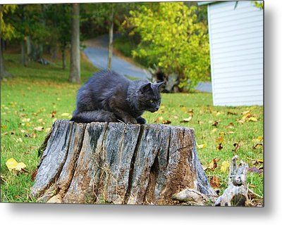 Metal Print featuring the photograph Gonna Gitcha by Julie Clements