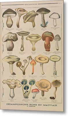 Good And Bad Mushrooms Metal Print
