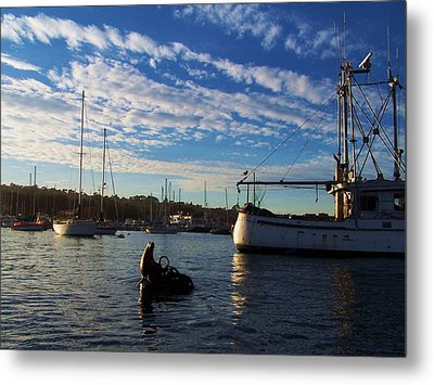 Metal Print featuring the photograph Good Lookin Out by Christine Drake