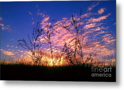 Good Morning Laramie Metal Print by Chris Tarpening