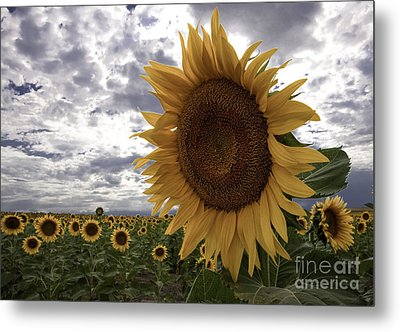 Metal Print featuring the photograph Good Morning Sunshine by Kristal Kraft