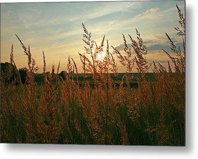 Good Morning Sunshine Metal Print by Shirley Heier