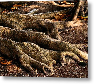 Good Roots Metal Print by Claudette Bujold-Poirier