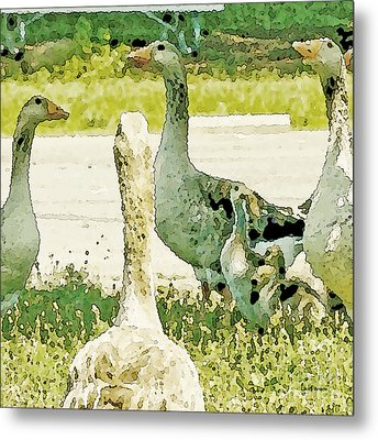 Goose Chat Metal Print by Artist and Photographer Laura Wrede