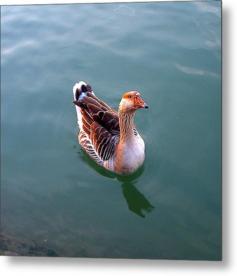 Goose Metal Print by Marc Philippe Joly