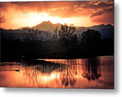 Goose On Golden Ponds 1 Metal Print by James BO  Insogna