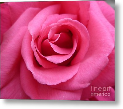 Gorgeous Pink Rose Metal Print by Vicki Spindler