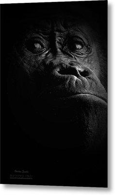 Gorilla Metal Print by Christine Sponchia