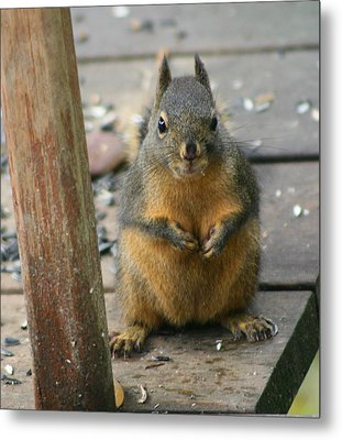 Got Food? Metal Print by Kym Backland