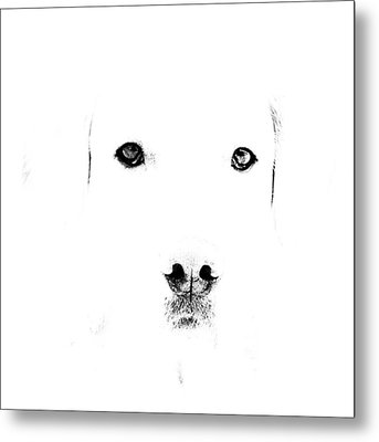 Dog Face Metal Print