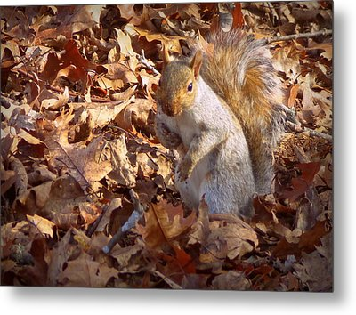 Got Nuts Metal Print by Joseph Skompski