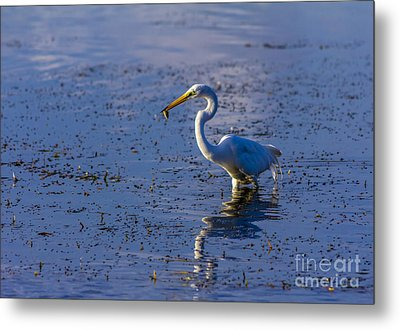 Gotcha Metal Print by Marvin Spates