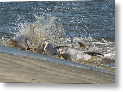 Metal Print featuring the photograph Gotcha by Patricia Schaefer