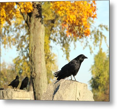 Three Ravens On A Gothic Graveyard Day Metal Print by Gothicrow Images