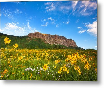 Gothic Meadow Metal Print by Darren  White