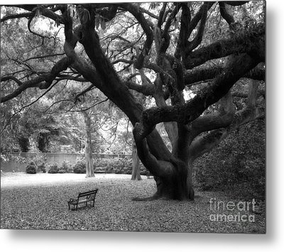 Gothic Surreal Black And White South Carolina Angel Oak Trees Park Landscape Metal Print
