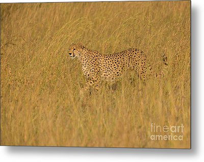 Grace And Elegance Metal Print by Ashley Vincent
