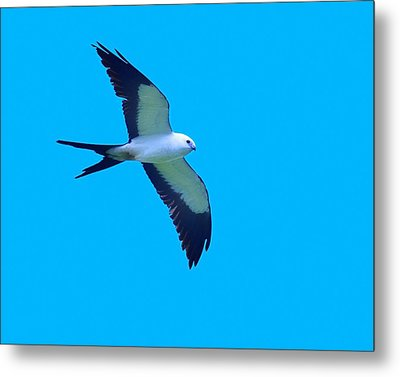 Grace And Majesty Metal Print by Tony Beck