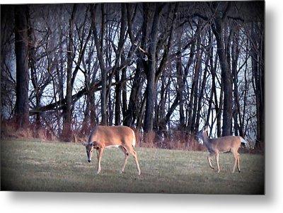 Graceful Deers Metal Print by Jose Lopez