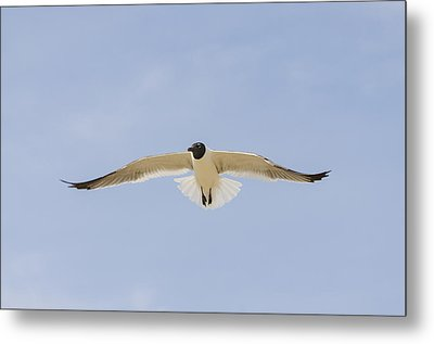 Graceful Gull Metal Print by Bradley Clay