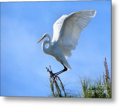 Metal Print featuring the photograph Graceful Landing by Deb Halloran
