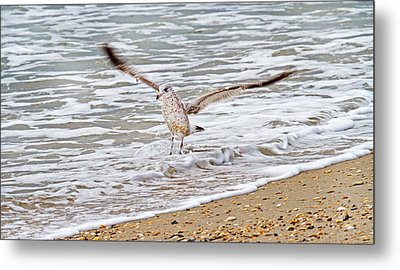 Graceful Landing Metal Print