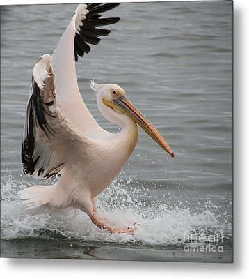 Graceful Landing Metal Print by Taschja Hattingh