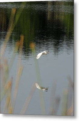 Graceful Metal Print by Teresa Schomig
