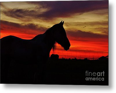 Gracie At Sunset Metal Print by Lynda Dawson-Youngclaus