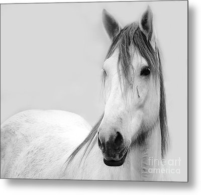 Gracie Grey Metal Print