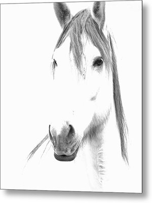 Gracie  Metal Print by Lynda Dawson-Youngclaus